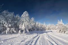 晴朗的冷的冬日 免版税库存图片