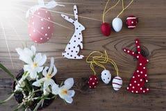 晴朗的复活节装饰、番红花、兔宝宝和鸡蛋 库存图片