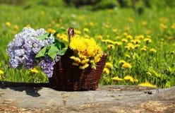 晴朗的夏天背景篮子用黄色蒲公英和丁香 免版税库存照片
