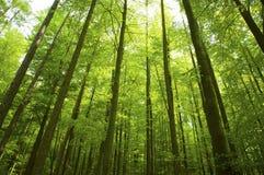 晴朗的射线在森林里 库存图片