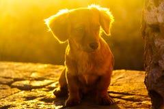 晴朗的小狗 免版税库存图片