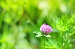 晴朗的抽象绿色自然弄脏了与野花,选择聚焦的背景 库存图片