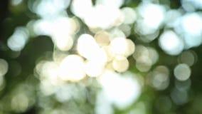 晴朗的抽象绿色自然背景 股票录像