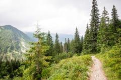 晴朗的旅游足迹在森林在秋天 免版税库存图片