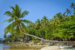 晴朗的早晨和棕榈树在泰国湾 免版税库存照片