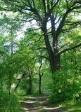 晴朗的早晨在森林沼地 免版税图库摄影