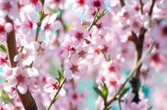 晴朗的春天开花 库存图片