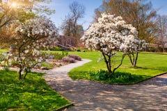 晴朗的春天早晨在埃森镇植物园里  免版税库存照片
