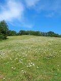 晴朗的春黄菊领域,与白色云彩的蓝天 库存照片