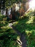 晴朗的森林 免版税库存照片