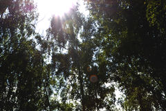 晴朗的森林 图库摄影