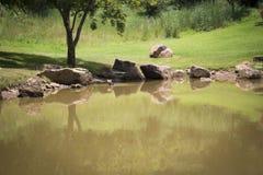 晴朗的池塘风景 免版税图库摄影