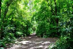 晴朗的热带森林 免版税库存图片