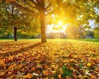 晴朗的秋天叶子 免版税库存图片