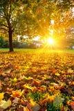 晴朗的秋天叶子 免版税图库摄影