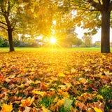 晴朗的秋天叶子 免版税库存照片