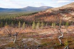 晴朗的秋天在北方针叶林森林里 库存图片