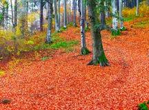 晴朗的秋天天在森林里 免版税库存照片