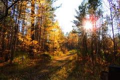 晴朗的秋天森林,退色的自然的秋天秀丽 免版税库存图片