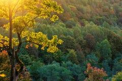 晴朗的秋天森林 库存照片