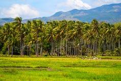晴朗的米调遣与棕榈树森林和山 热带自然水平的照片 免版税图库摄影