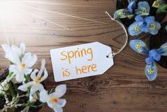 晴朗的花,标签,文本春天在这里 库存照片