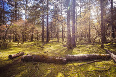 晴朗的草甸在森林里 免版税库存照片
