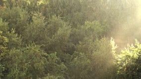 晴朗的雨在自然的森林里 影视素材