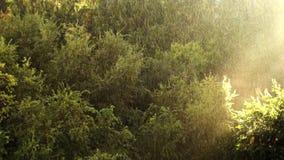 晴朗的雨在黑暗的森林里 股票视频