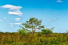 晴朗的结构树 库存照片