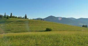 晴朗的绿色山 蓝天和小山草甸 摇摄 山的森林 在的全景美丽的杉树 股票视频