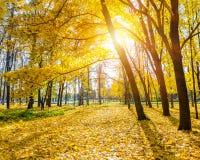 晴朗秋天的公园 免版税库存照片