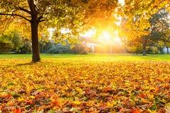 晴朗秋天的公园 库存图片