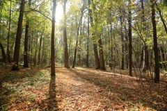 晴朗秋天的公园 免版税库存图片
