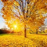 晴朗秋天的叶子 免版税库存图片