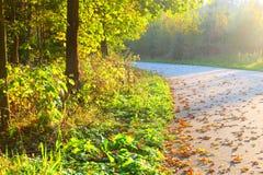 晴朗秋天的路 免版税库存照片