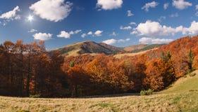 晴朗秋天背景美丽的日草横向的天空 库存照片