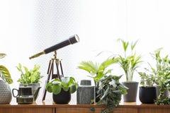 望远镜和植物木内阁的反对白色背景 库存照片