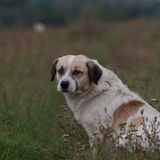朝前看无家可归的狗休息和 免版税库存图片