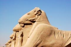 朝向的karnak卢克索公羊狮身人面象 库存照片