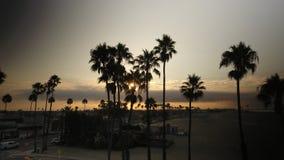 朝阳爬行从一个小组棕榈树的后面 免版税库存图片