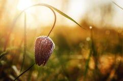 朝阳的力量 图库摄影
