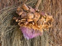 朝鲜蓟的干花的细节 库存照片