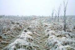 期初冬天 库存照片