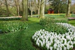 期初庭院新的春天 库存照片
