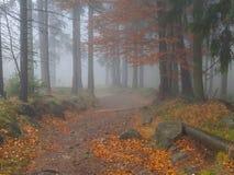 朦胧的森林 免版税图库摄影