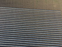 朦胧的温室行领域的 在闭合的地面的生长菜 领域的温室 免版税图库摄影