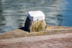 木与白色系船柱在港口 免版税库存图片