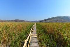 木人行桥在Sic芦苇储备的秋天 免版税库存图片