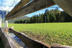 木低谷用母牛的水填装能喝 免版税库存图片
